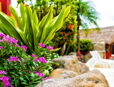Sea-Breeze-Ocean-Garden